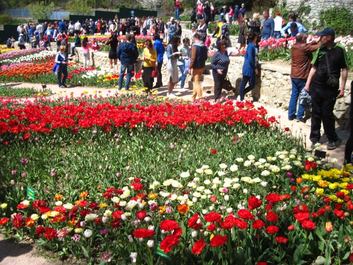 Парад тюльпанов в Никитском ботаническом саду 2018