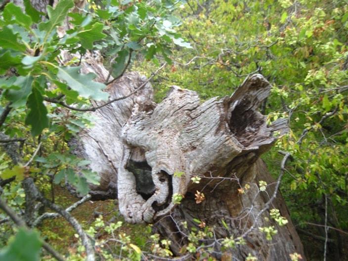 необычное дерево-телефон